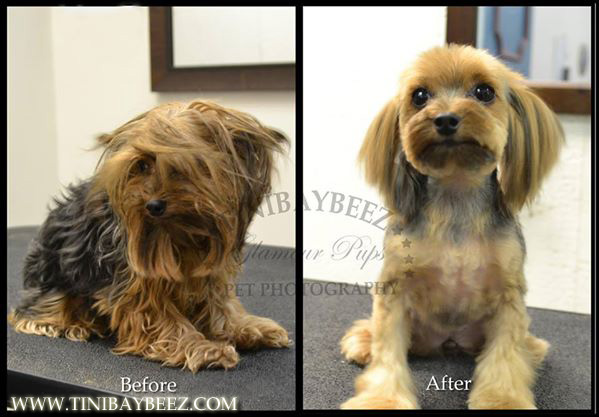 Tinibaybeez Creative Dog Grooming By Tina Nichols In Portage